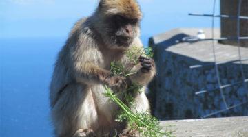 Gibraltar – křižovatka pro letadla a opičí poloostrov