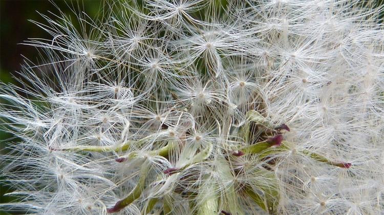 Alergie – moderní metla lidstva