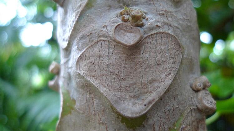 Srdce – čerpadlo života