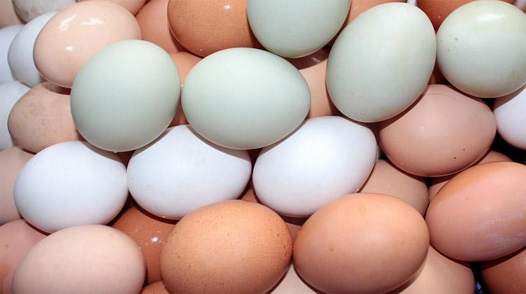 Řeklo by se obyčejné vejce…