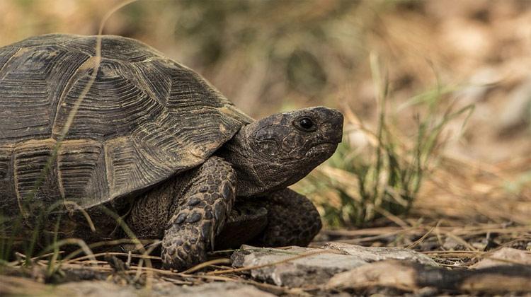 Krunýř – ochrana do želví nepohody